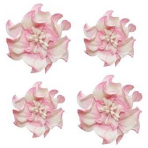 Цветы кудрявой фиалки цвета Бело-Розовые от ScrapBerry's