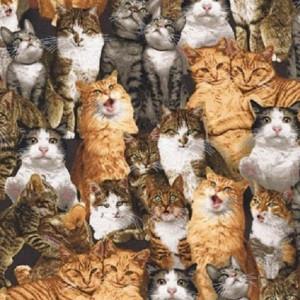 Ткань Cat Crazy Robert Kaufman
